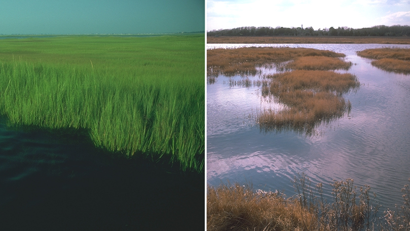 Secrets of the Salt Marsh