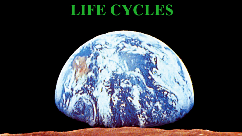 Life Cycles - image
